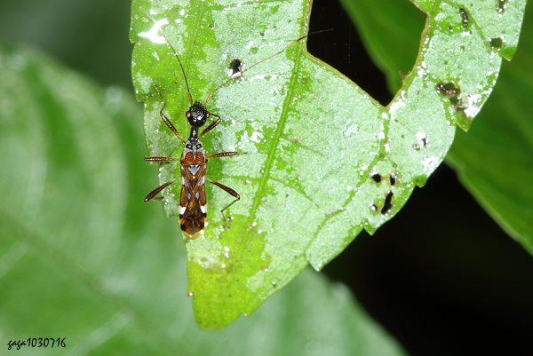 蚂蚁树叶拼贴画