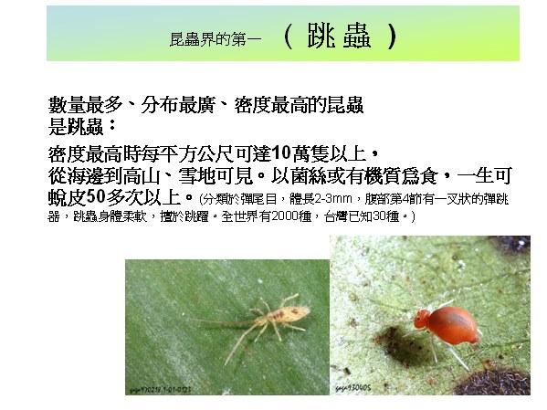 世界上飞行最快的昆虫—沙漠蝗虫