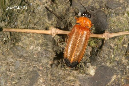 壁纸 动物 甲壳类 昆虫 桌面 450_300