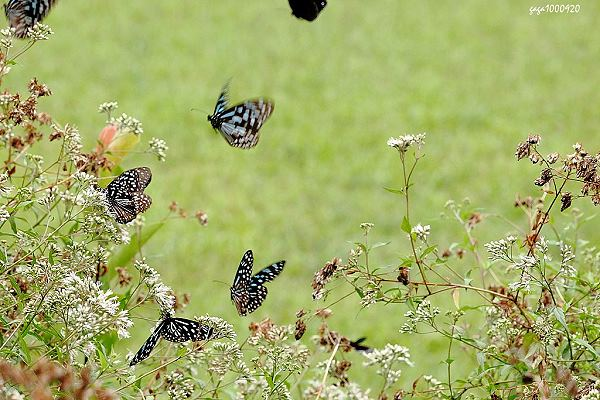 花坛最吸引人    蝴蝶满天飞舞    在这里上课一定很幸福 校园左侧