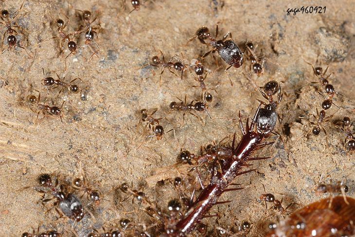 观察蚂蚁身体结构图