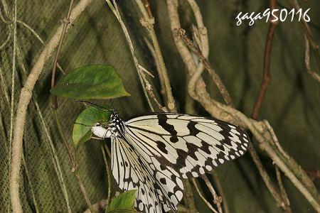 壁纸 动物 鸟 鸟类 雀 450_300