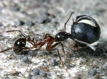 蚂蚁脚简笔画图片大全