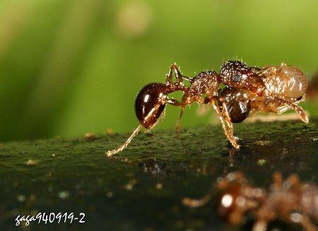 蚂蚁搬家简笔画;