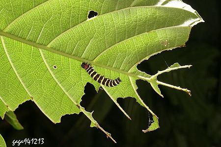 若不嫌冷翻翻石头也会找到蜻蜓,蜉蝣,石蝇,石蚕蛾的幼虫,枯木或石缝里