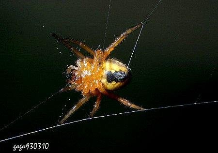 蜘蛛吐丝简笔画