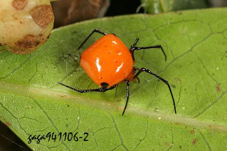 http://gaga.biodiv.tw/new23/9411/643.jpg
